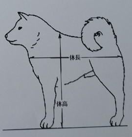 新潟県三条市の豆柴の犬種標準に基づいて繁殖しています